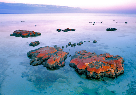 Living Red Stromatolite Shark Bay Australia